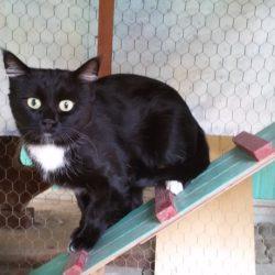 Paolino, il gatto in frac !