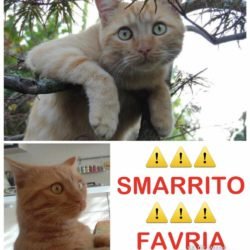 A Favria