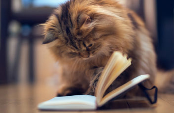 Cat-Book