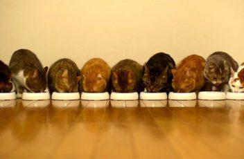 http_media.petsblog.it44e2GattiMangianoSincronizzati