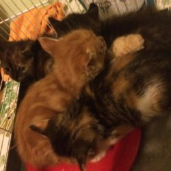 Al gattile si Santhià