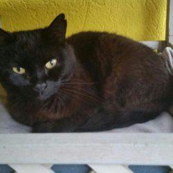 Gatto nero ad Azeglio