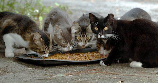 Illegittima l'ordinanza comunale che vieta di dar da mangiare a cani e gatti randagi