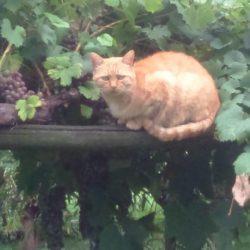 Ginger – Borgofranco