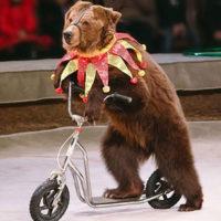 Dirigenti scolastici vietano circo ai bimbi: diseducativi gli animali sottomessi.