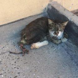 Colonia felina di Piazza Fillak – Ivrea
