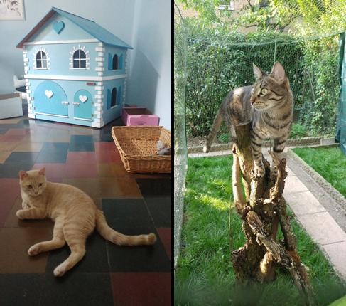 """Pavia, il primo albergo a 5 stelle per gatti: ''Qui trattati come re"""""""