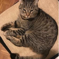 Ivrea – Crist: gattina con collare