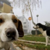 Diritti animali a Siracusa