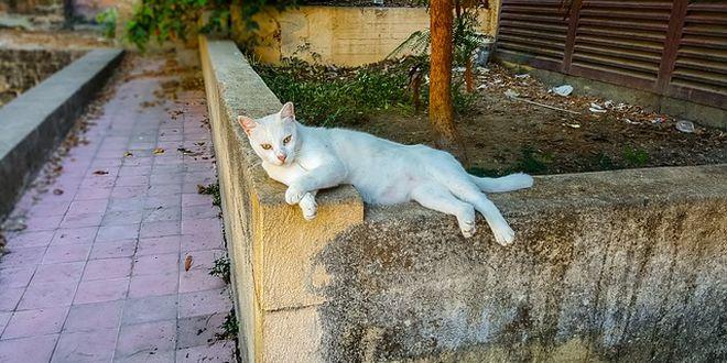 E' vietato nutrire i gatti randagi ?