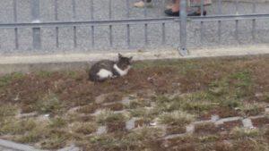 Strambino 12 Gatti Perlopiù Cuccioli Eporedianimali Onlus