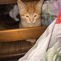 Nicolini – 2 gattini