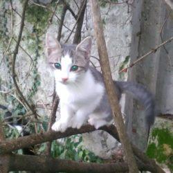 Due gattini nel calusiese