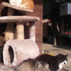 Alcuni dei nostri gatti
