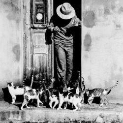 44 GATTE ….: progetto di prevenzione e gestione di colonie feline