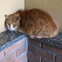 Il gatto adottato ha paura e si nasconde: che fare ?