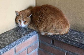 gatto-trovato-a-busto-arsizio-583104