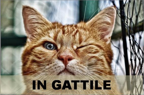 In gattile
