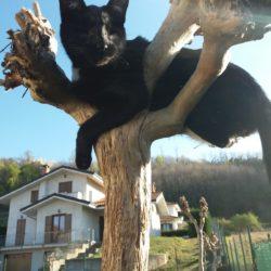 Un gatto cieco… perché no ?