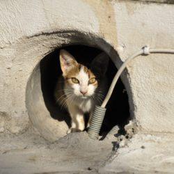 Segnalazione animali feriti o in difficoltà