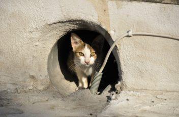 stray-cat-169113_960_720