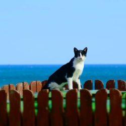 Ferie: e il gatto ?