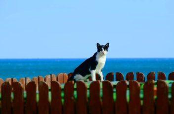 cat-2071025__340