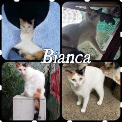 Bianca e Tigro