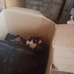 Tre gattini a Torrazza