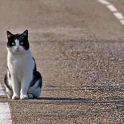 Cosa fare se si trova un gatto ?
