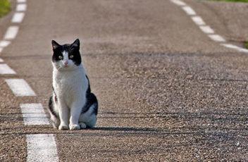gatto_strada
