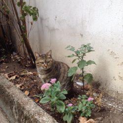 Azeglio – gatta investita – chi la riconosce ?