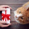 Pacchetti natalizi – Carrefour Burolo