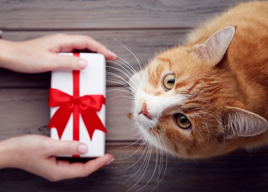 Pacchetti natalizi - Carrefour Burolo
