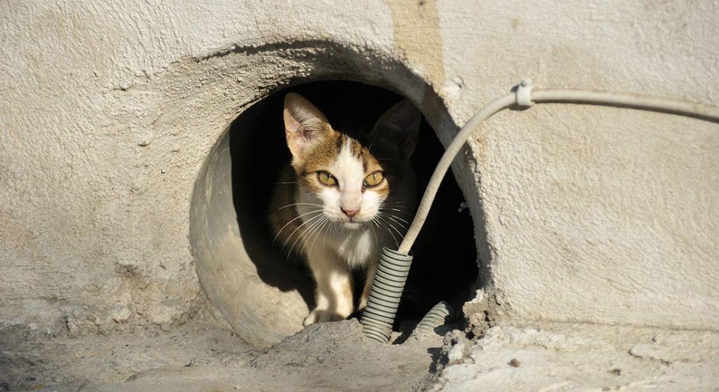 Gatti: foto prima e dopo !