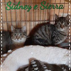 Sidney e Sierra