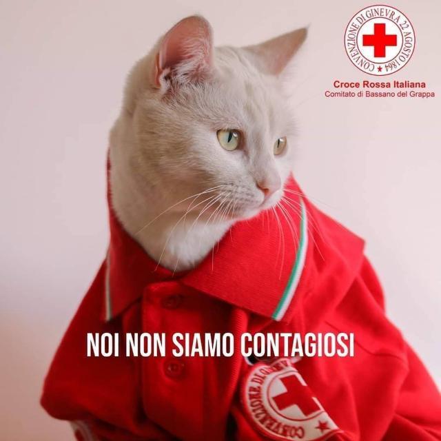 Gli animali non trasmettono il virus, non abbandoniamoli !