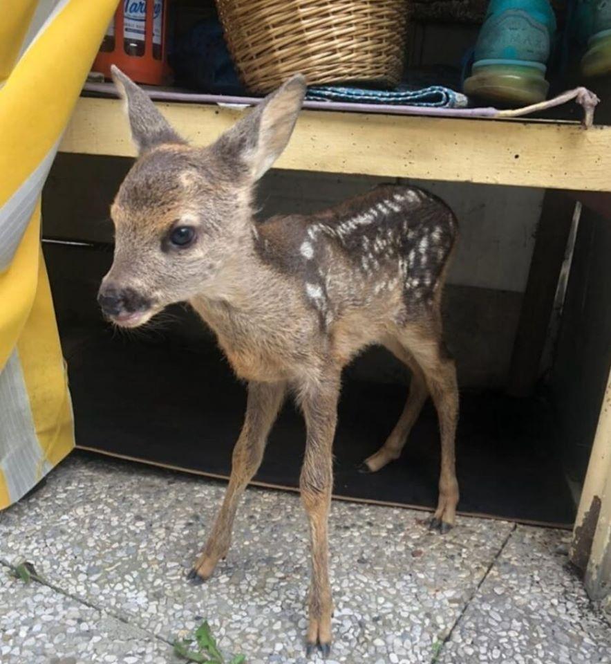 Cuccioli di animali selvatici: non toccateli !