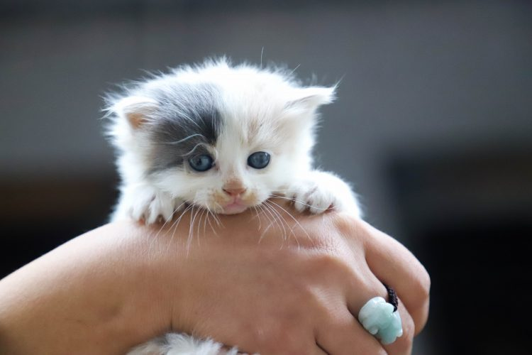 Lo voglio piccolo, anzi piccolissimo.