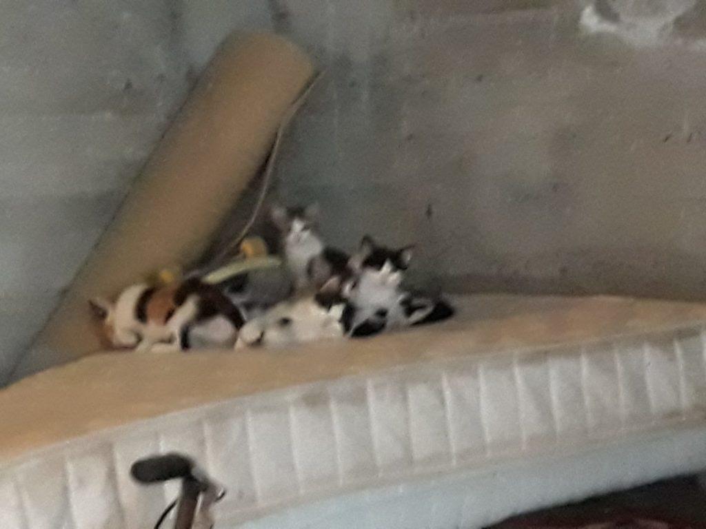Due mamme e 7 cuccioli