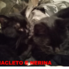 Nerina e Anacleto: cercasi stallo