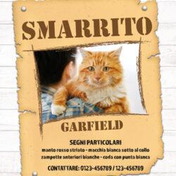 Consigli per trovare un gatto smarrito