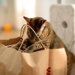 Cosa serve in gattile ? cibo, antiparassitari, scaffali…