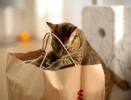 Cosa serve in gattile ? cibo, antiparassitari, scaffali...