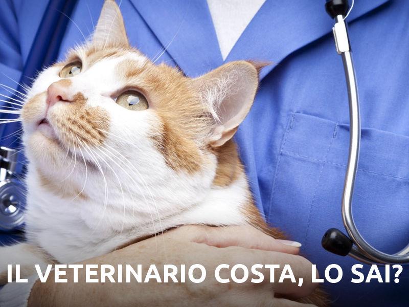 Il veterinario costa, lo sai?